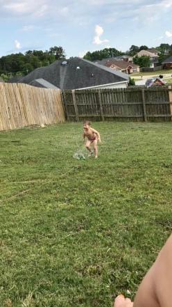 Baby J Sprinklers